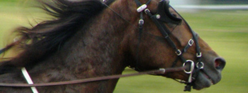 Fem bästa hästar i Elitloppet